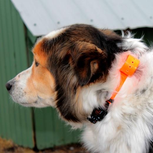 sportdog no bark collar instructions