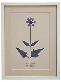 framing pressed flowers instructions