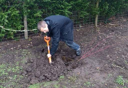 bare root tree planting instructions